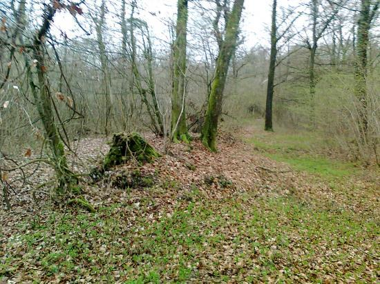 Bois de St Arnoult, Gruyères; restes de voie