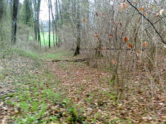 bois de St Arnoult;descente de voie venant du Sud, vers Bois du Mellier