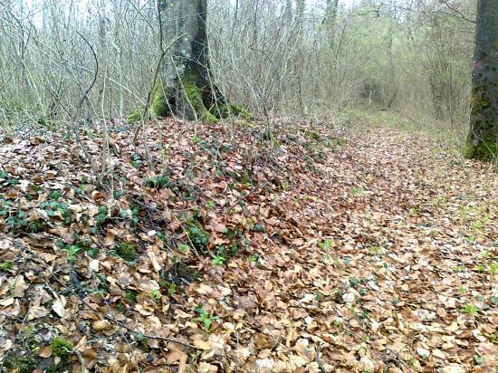 bord de voie, bois de Gruyères